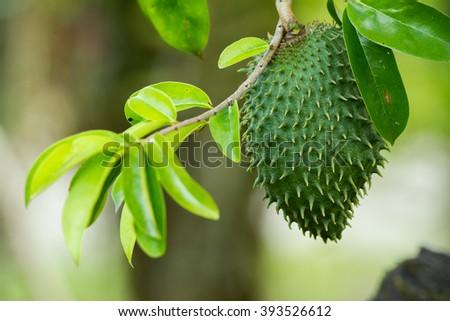 Soursop, Guanabana, Custard Apple, Annona muricata on wooden board Stock photo © galitskaya