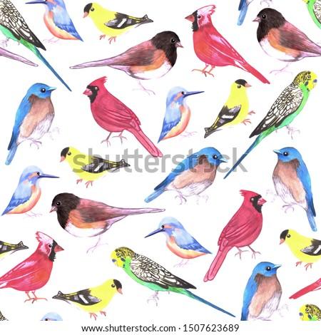 Colorful watercolor birds seamless background in tetrad color scheme Stock photo © shawlinmohd
