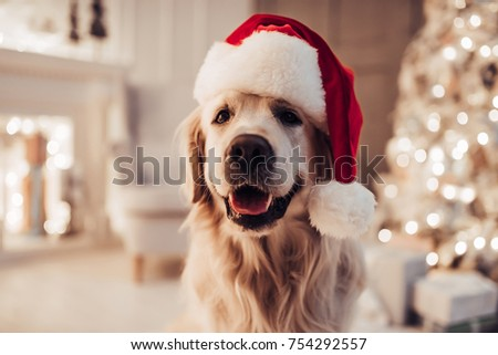 Happy winter holidays concept. Cute pedigree puppy sits on white comfortable bed, looks thoughtfully Stock photo © vkstudio