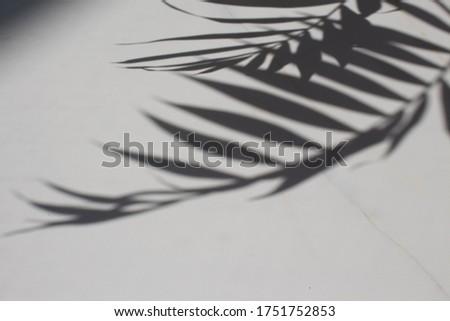 Foto stock: Abstrato · arte · botânico · sombras · preto · marca