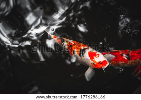 カラフル ニシキゴイ 魚 池 京 日本 ストックフォト © galitskaya