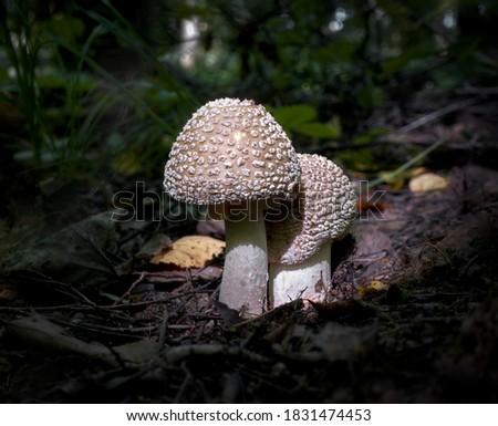 молодые гриб растущий трава газона Сток-фото © klsbear