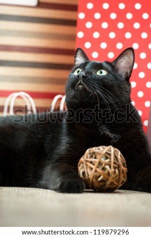 Portrait of a black cat pet lying near the red shopping paper ba Stock photo © HASLOO