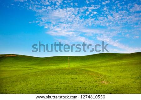 Green Wheat Grass Blue Skies Telephone Pole Palouse Washington  Stock photo © billperry