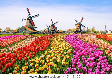 Traditional dutch windmill near the canal. Netherlands. Old windmill stands on the banks of the cana Stock photo © mcherevan