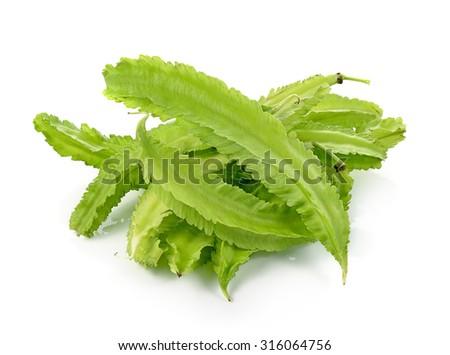 Winged bean isolated on white background. (Psophocarpus tetragon Stock photo © ungpaoman