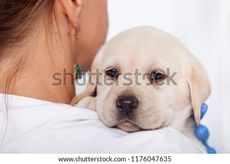 Cute · Лабрадор · щенков · собака · оружия · ветеринарный - Сток-фото © ilona75