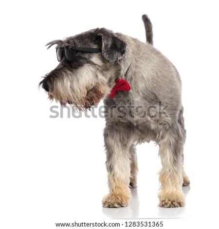 úriember schnauzer visel napszemüveg külső oldal Stock fotó © feedough