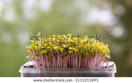 Spring salad with broccoli and kale microgreens on a white background Stock photo © madeleine_steinbach