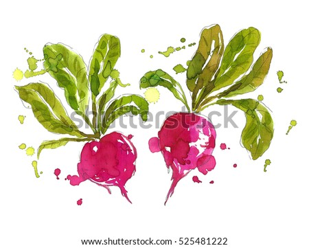 Bright pink radish with green leaf icon isolated, organic fresh vegetable, healthy food, vector illu Stock photo © MarySan