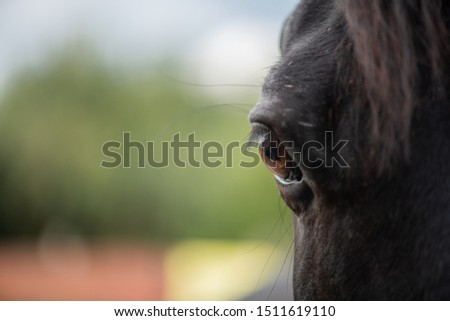 Right brown eye with eyelashes of young black purebred racehorse Stock photo © pressmaster