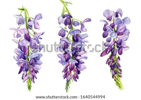 Blauw bloemen bladeren botanische tuin natuur Stockfoto © Anneleven