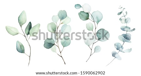 Eucalyptus Stock photo © derocz