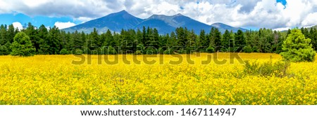 Tree marigold or Mexican tournesol or Mexican sunflower or Japan Stock photo © sweetcrisis