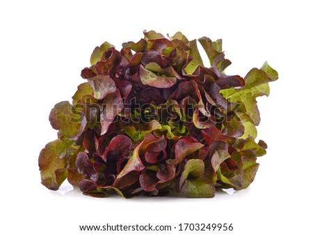 Zielone świeże sałata biały najlepszy Zdjęcia stock © mcherevan