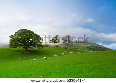 green fields in the english countryside with grazing sheep engl stock photo © capturelight