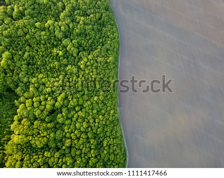 Top view field with young trees, conservation of the forest. Photo from the drone Stock photo © artjazz
