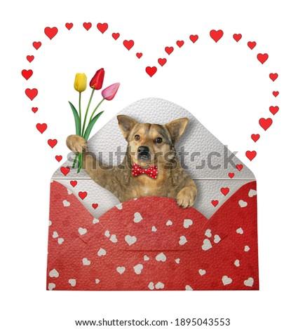 犬 · 封筒 · サンタクロース · 座って - ストックフォト © heliburcka