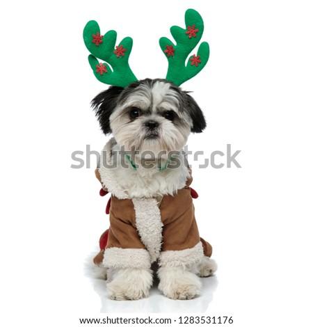 adorable shih tzu wearing santa reindeer costume looks to side Stock photo © feedough
