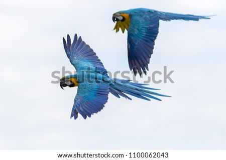 azul · amarelo · vôo · árvores · olho · olhos - foto stock © galitskaya