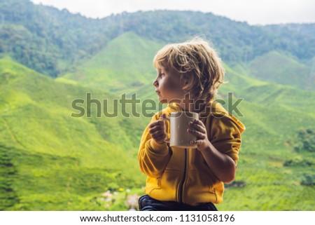 Fiú iszik egészséges zöld tea tea ültetvény Stock fotó © galitskaya