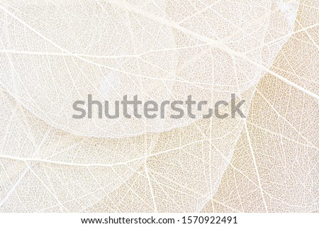 Skeleton of natural pattern leaf with veins. Creative backgrop for your ideas in a color of the year Stock photo © artjazz