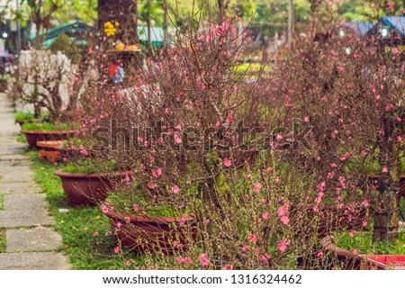 Rózsaszín virágzó fák becsület új év virág Stock fotó © galitskaya