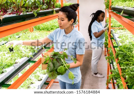 Two young intercultural female greenhouse workers taking care of green seedlings Stock photo © pressmaster