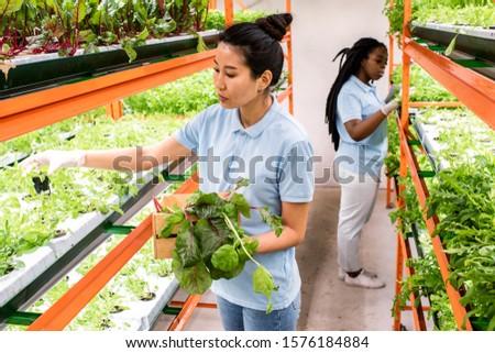 Zwei jungen weiblichen Gewächshaus Arbeitnehmer Aufnahme Stock foto © pressmaster