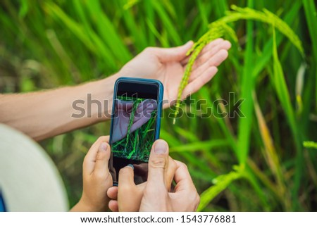 Boy identify plants using the application on a smartphone. augmented reality Stock photo © galitskaya