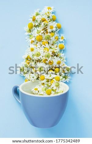 カップ 茶 カモミール ドロップ ソーサー 孤立した ストックフォト © aniriana