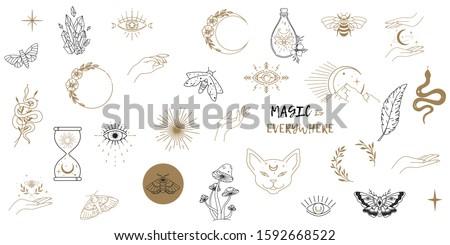pillangó · tökéletes · tetoválás · egyéb · terv · illusztráció - stock fotó © lenaberntsen