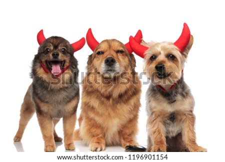 adorable group of pomeranian, metis and terrier dressed as devil Stock photo © feedough