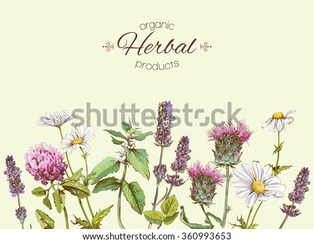 Milk thistle used as medicinal herb Stock photo © bdspn