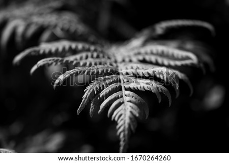 Macro photo of green leaf of fern on gray background with copy space. Natural creative layout. Top v Stock photo © artjazz