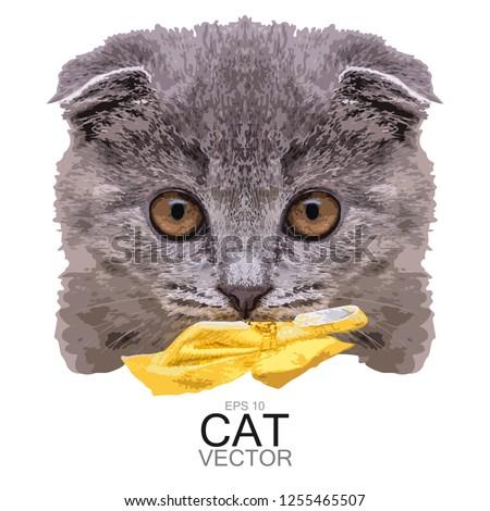 Scottish fold cat Vector detailed 3d illustration. cartoon chara Stock photo © frimufilms