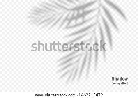 Shadows, overlay effects mock up, leaf of palm tree plant, natural interior light, vector illustrati Stock photo © MarySan