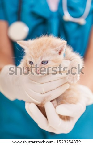 veterinário · estetoscópio · gato · clínica · medicina - foto stock © ilona75