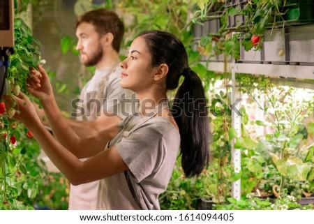 Mooie jonge brunette landbouwer werkkleding naar Stockfoto © pressmaster