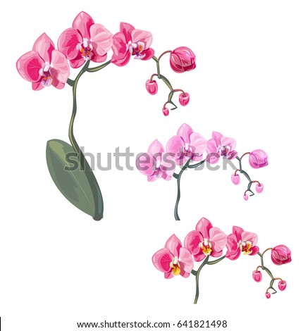 Pink dendrobium orchid with green leaves in watercolor medium Stock photo © shawlinmohd