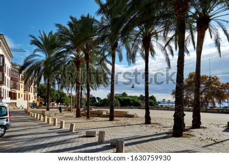 Sunny coastal palm lined street empty promenade leading along Me Stock photo © amok