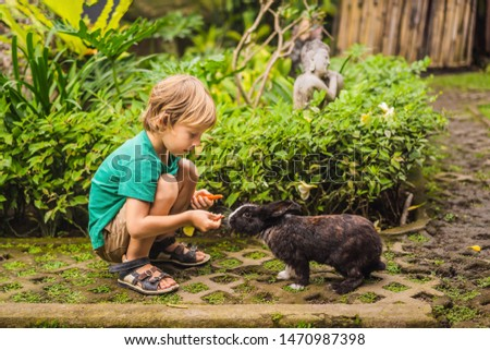 The boy feeds the rabbit. Cosmetics test on rabbit animal. Cruelty free and stop animal abuse concep Stock photo © galitskaya