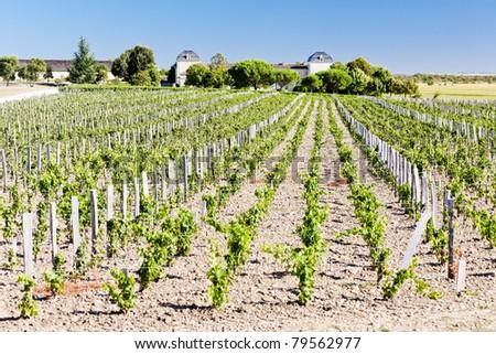 Winnicy region Francja rolnictwa Zdjęcia stock © phbcz