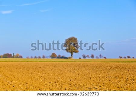 Természetes full frame mező aratás fa természet Stock fotó © meinzahn