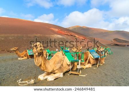 Tevék park várakozás turisták sivatag nyár Stock fotó © meinzahn