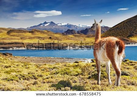 осень · парка · Чили · юг · один · красивой - Сток-фото © xura