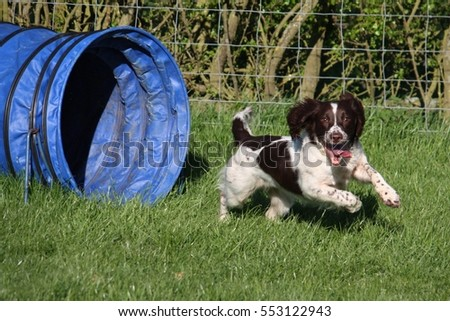 travail · type · anglais · animal · sautant - photo stock © chrisga