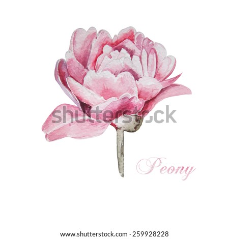 Wedding card with peach peonies . Watercolor painted vector card Stock photo © mcherevan