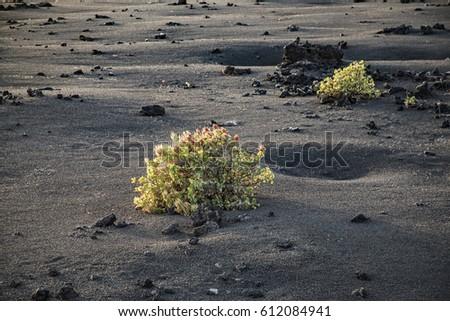 Bush vulkanisch park natuur aarde plant Stockfoto © meinzahn