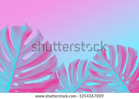 tropical Split Leafs Philodendron plants on ultra violet, pink and blue duotone background, trendy d Stock photo © artjazz